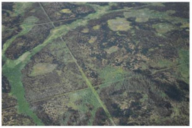 Seismic lines and fire scars in the Taiga Plains
