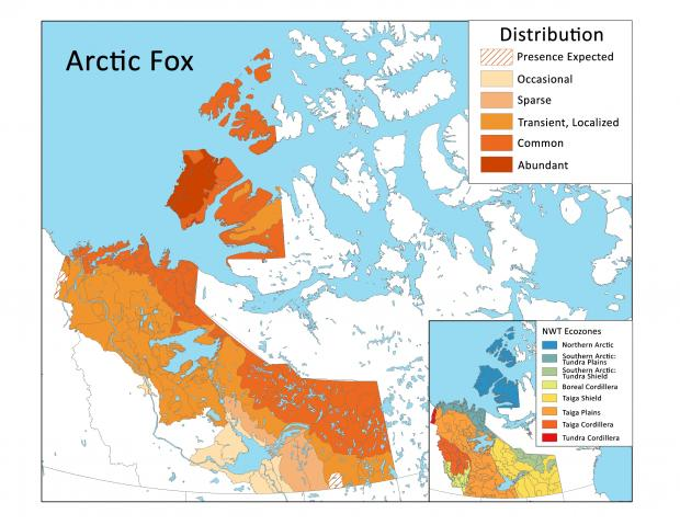 Arctic Fox distribution map