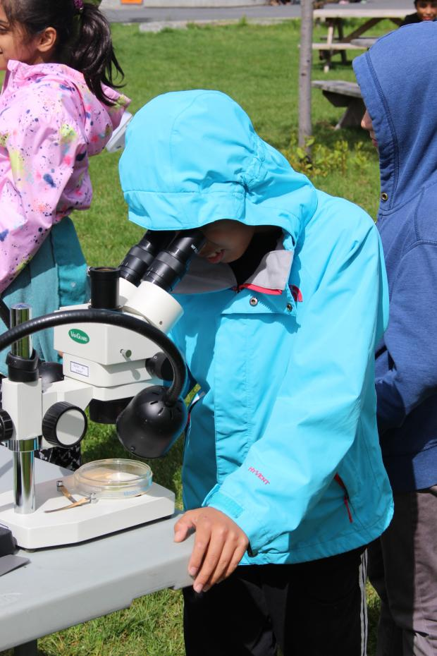 A student uses a microscope to observe a benthic organism.