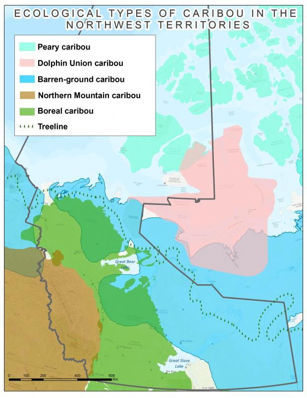 Ecological types of caribou in the NWT