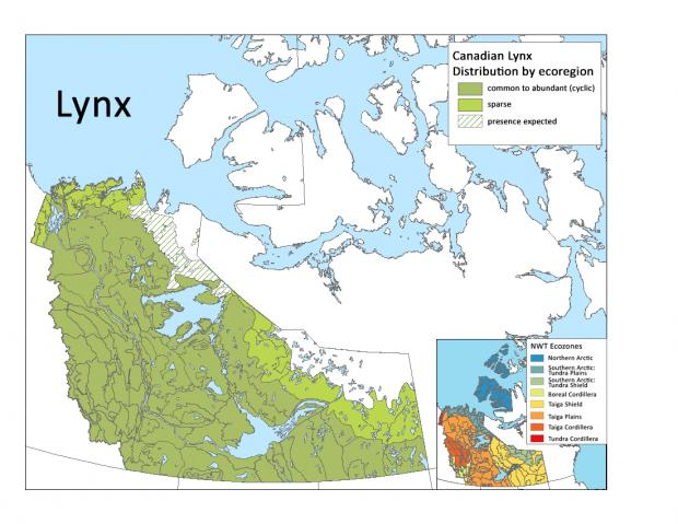 Canadian distribution of Lynx by ecoregion
