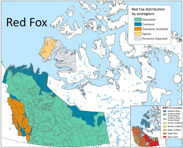 Red Fox distribution by ecoregions