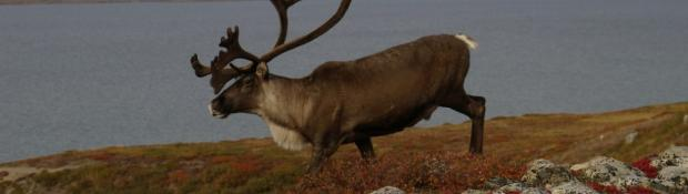 Apply for a Hunting Licence | Environment and Natural Resources